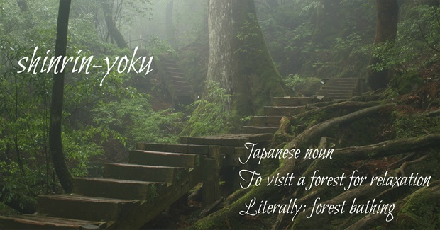 Shinrin-Yoku - Forest Bathing