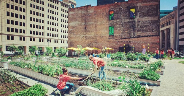 From Floating Food Forests to Vacant Lot Crops, Urban Farming Is Taking Root Across America