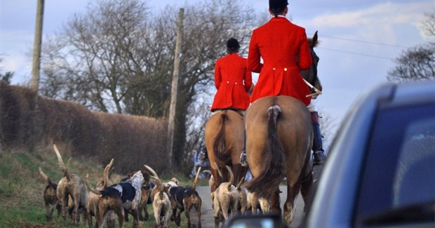 "Act Outlawing Fox Hunting In The UK Under Threat, MPs Due to Vote On ""Amendment"""