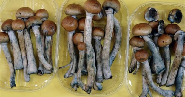 Single magic mushroom 'can change personality'
