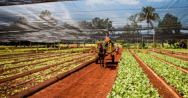 Cuba's Sustainable Agriculture at Risk as U.S. Relations Improve