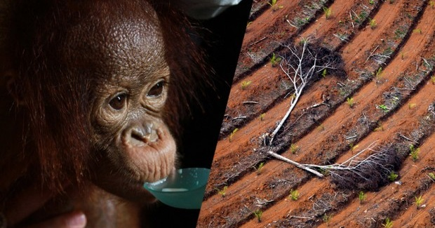10 Shocking Facts Showing How Companies Are Still Trashing Indonesia's Rainforests