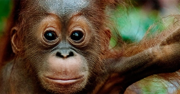 Stop Subsidies for Palm Oil Power Stations in Britain