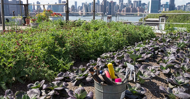 EHP - Urban Gardening: Managing the Risks of Contaminated Soil