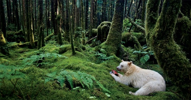 Landmark Deal to Protect Canadian Rainforest Called a 'Gift to the World'