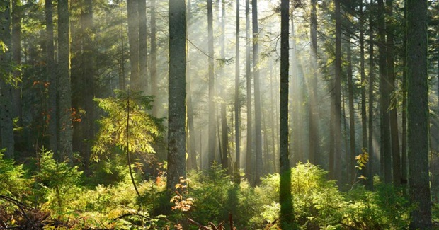 How Forests Can Be a Bigger Part of the Answer to Climate Change