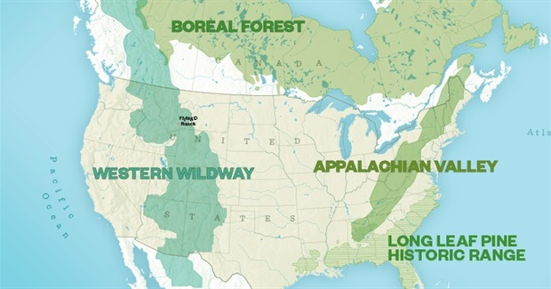 Setting Aside Half the Earth for 'Rewilding': The Ethical Dimension