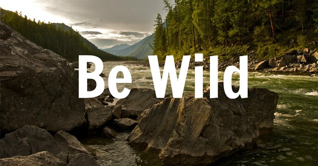 10 Reasons to Embrace Wildness