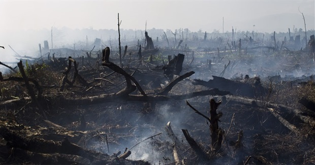 Indonesia's Forest Fires Show We Need to Talk About Palm Oil
